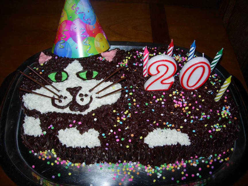 20 Birthday Cake  Ronna s Blog Domino s Birthday Cake