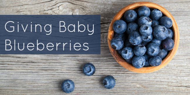 Blueberry Baby Food Recipe  Blueberry for Baby Food Recipes Important Allergy