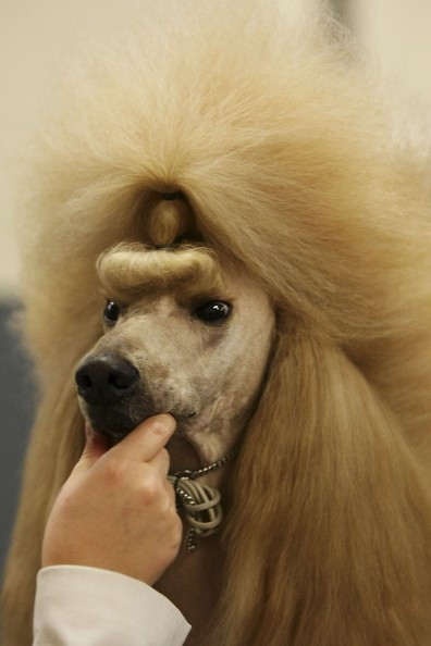 Cool Dog Haircuts  Cool Dog hairstyles