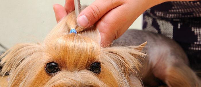 Cool Dog Haircuts  15 Funniest Dog Haircuts Care munity