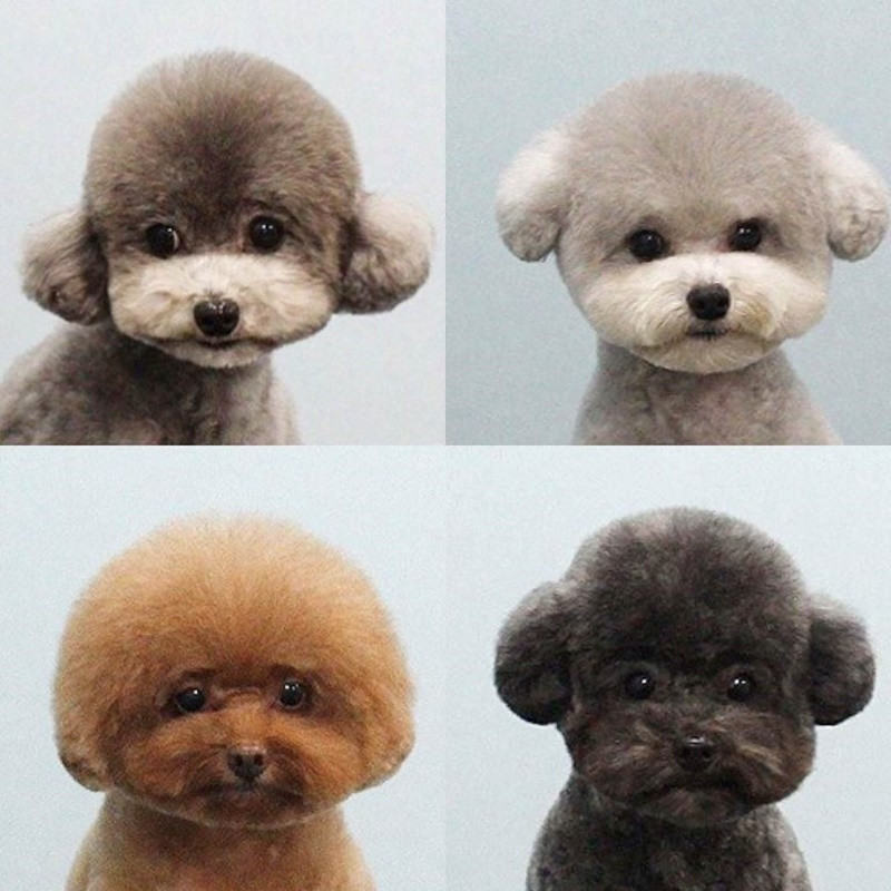 Cool Dog Haircuts  140 Poodle Haircuts Your Pet Will Definitely Love
