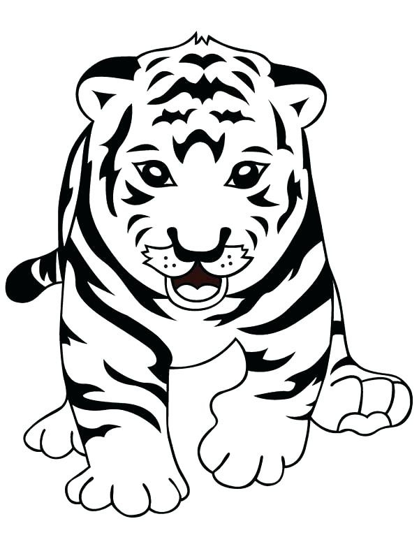 Cute Baby Tiger Coloring Pages  Baby White Tiger Drawing at GetDrawings