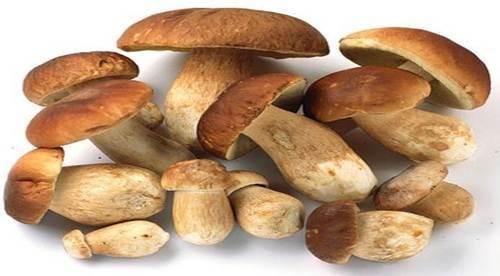 Dried Porcini Mushrooms Trader Joe'S  Dry Porcini Mushroom at Rs 6700 kilogram