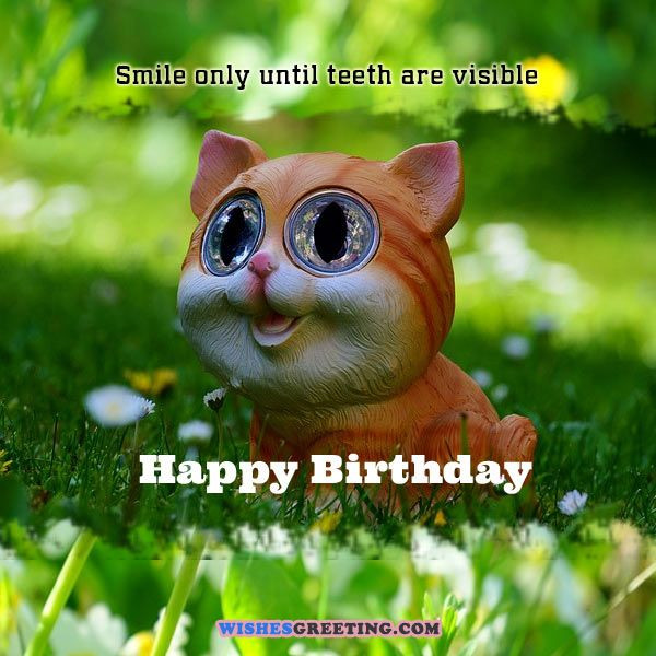 Funny Birthday Greetings  105 Funny Birthday Wishes and Messages