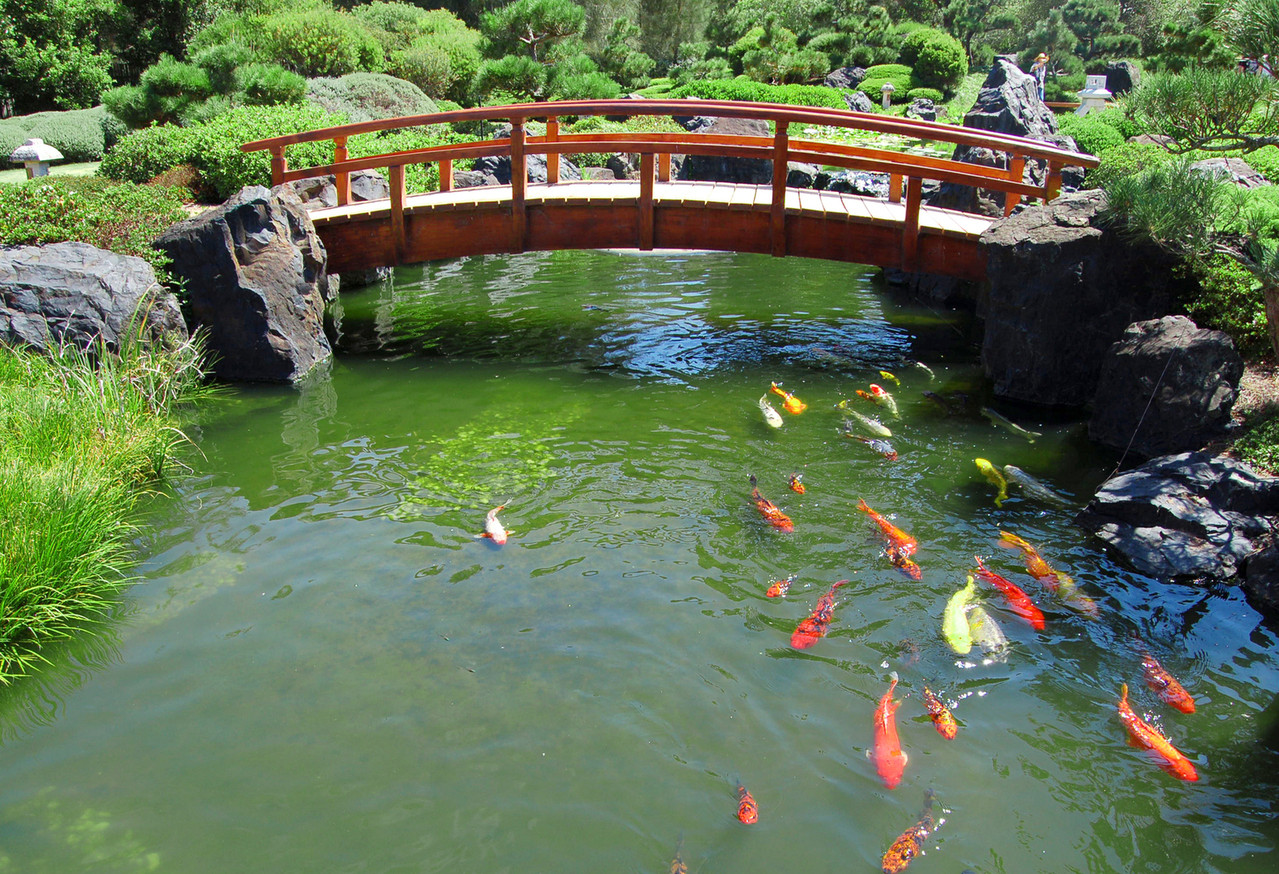 Pond In Backyard  DIY Build a Natural Fish Pond in Your Backyard