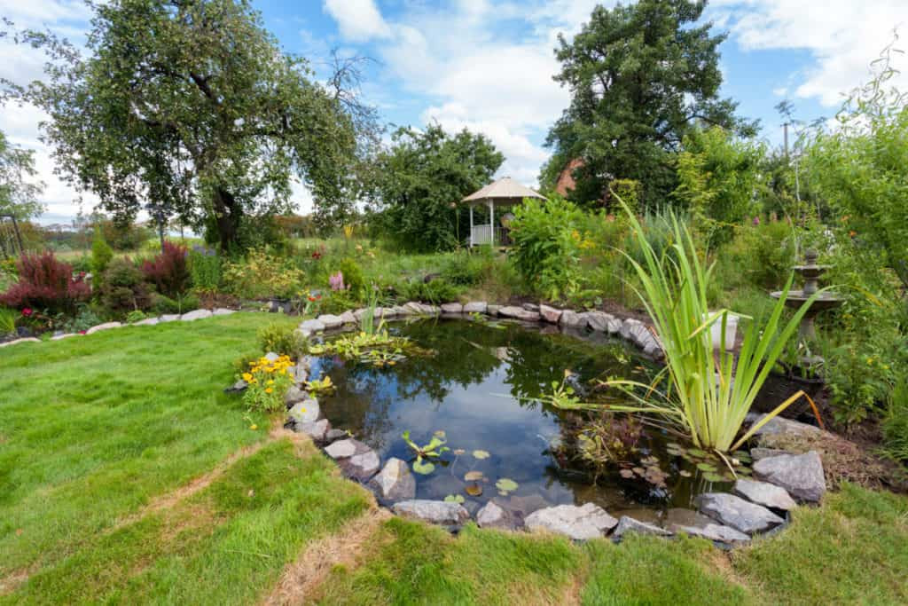 Pond In Backyard  7 Ways To Keep Your Pond Clear