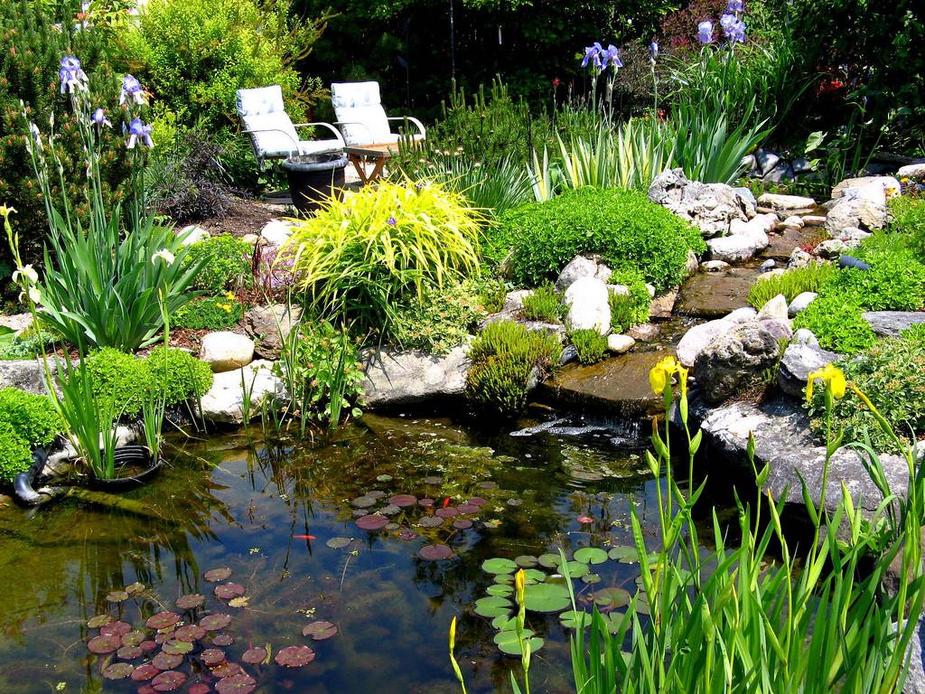 Pond In Backyard  Native plants for a pond