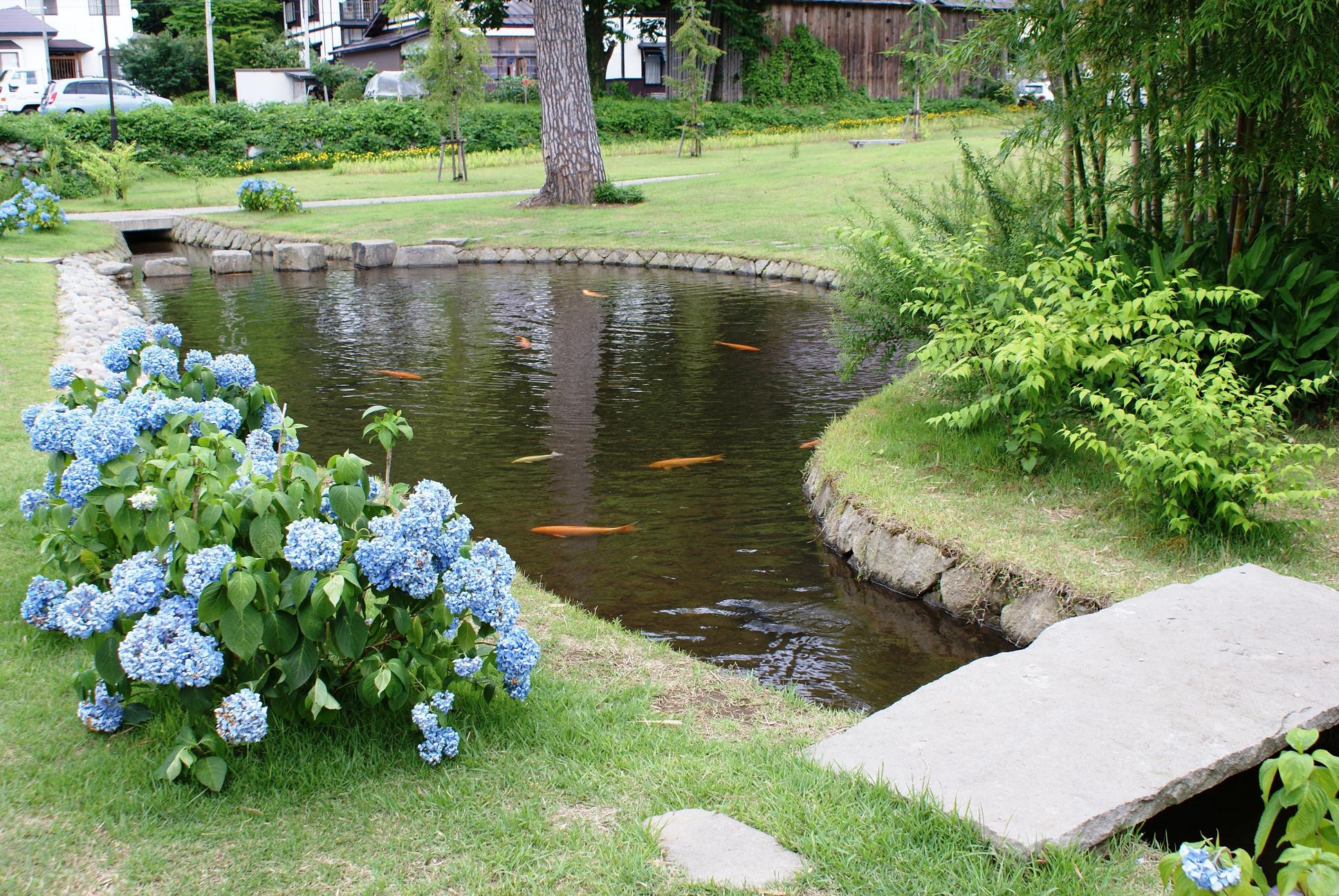 Pond In Backyard  Sustainable Backyard Fish Farming How to Dig A Pond