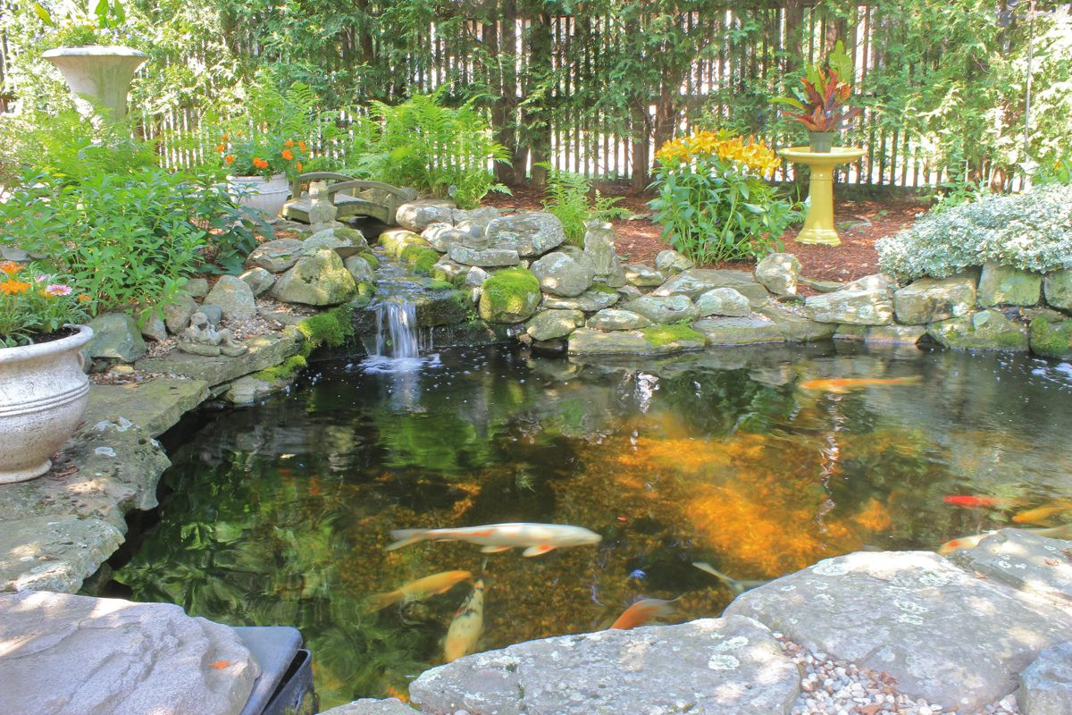 Pond In Backyard  Backyard Koi Ponds and Water Gardens are a Growing Trend