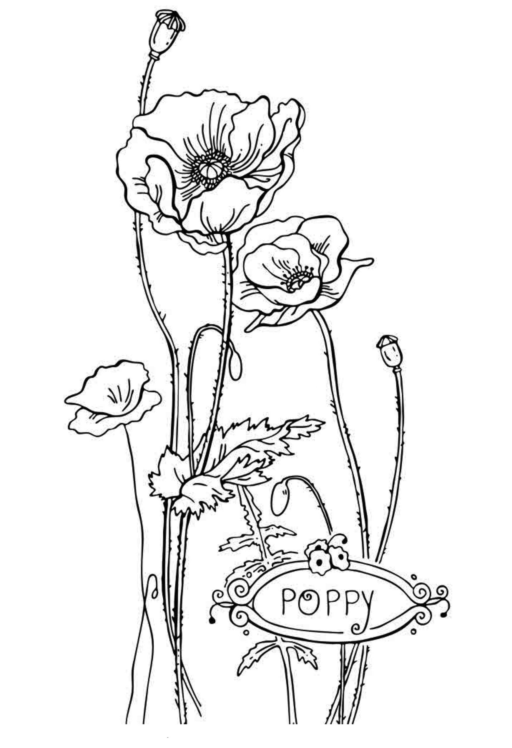 Printable Kids Coloring Pages  Free Printable Flower Coloring Pages For Kids Best