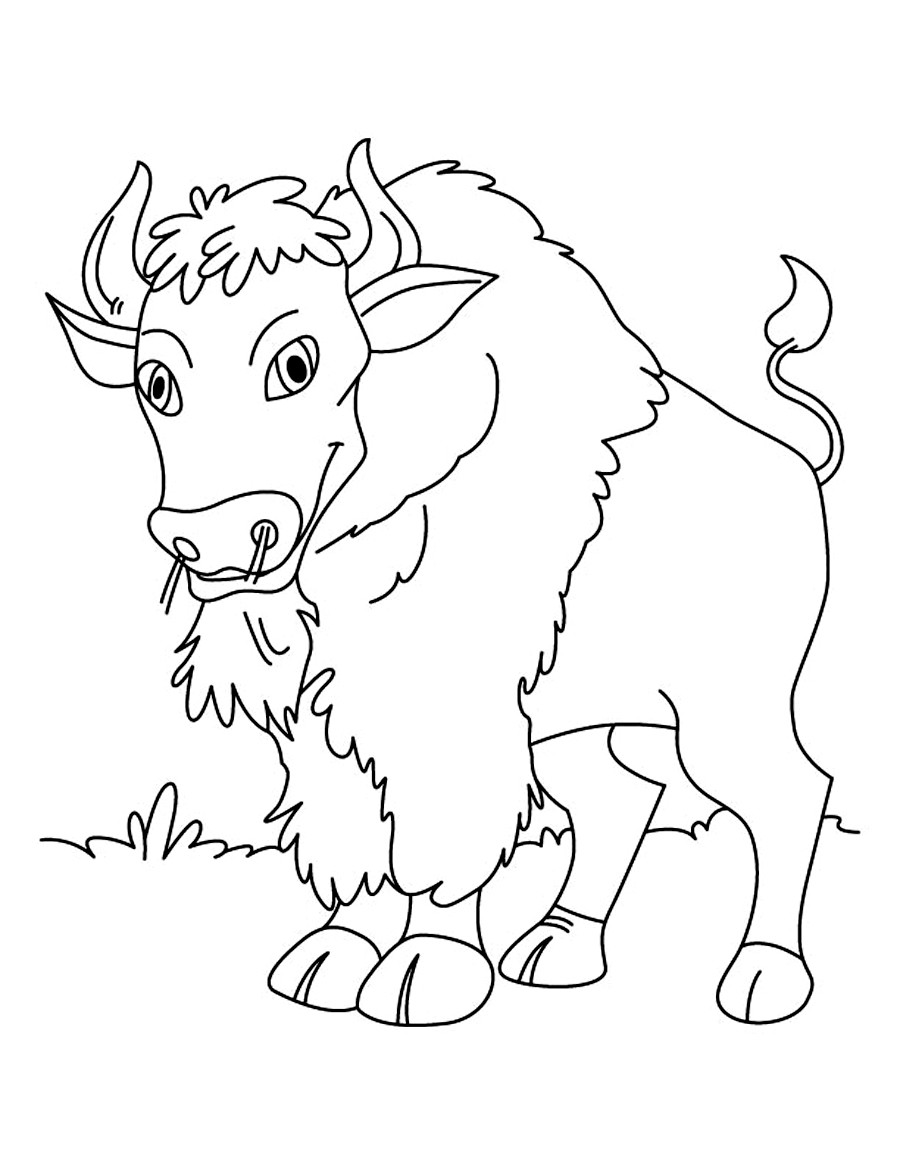 Printable Kids Coloring Pages  Free Printable Bison Coloring Pages For Kids