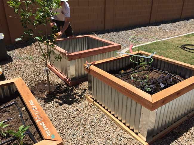 Raised Garden Boxes DIY  DIY Raised Garden Beds with Corrugated Metal