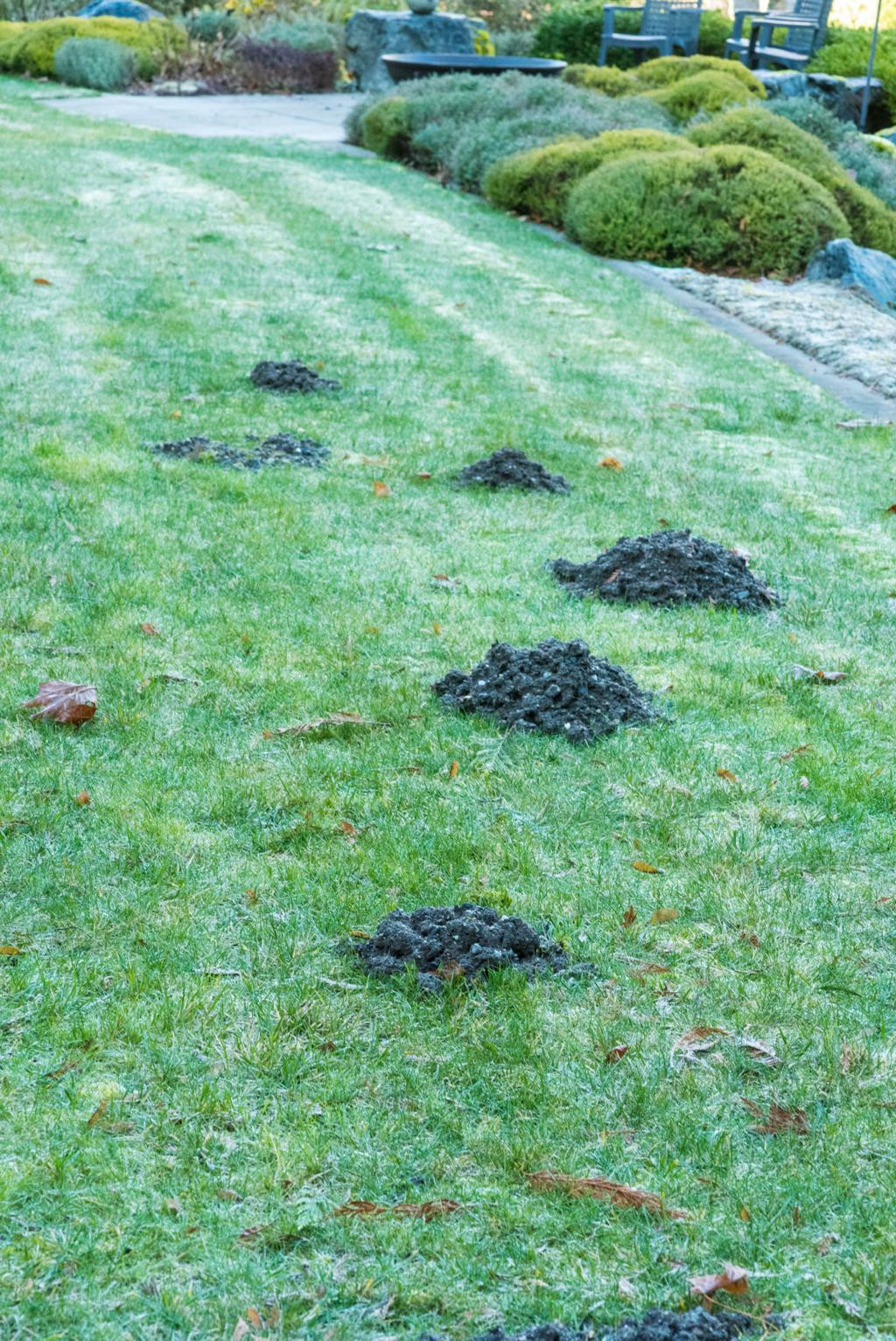 Rats In Backyard  How to Get Rid Rats In Your Backyard 2021