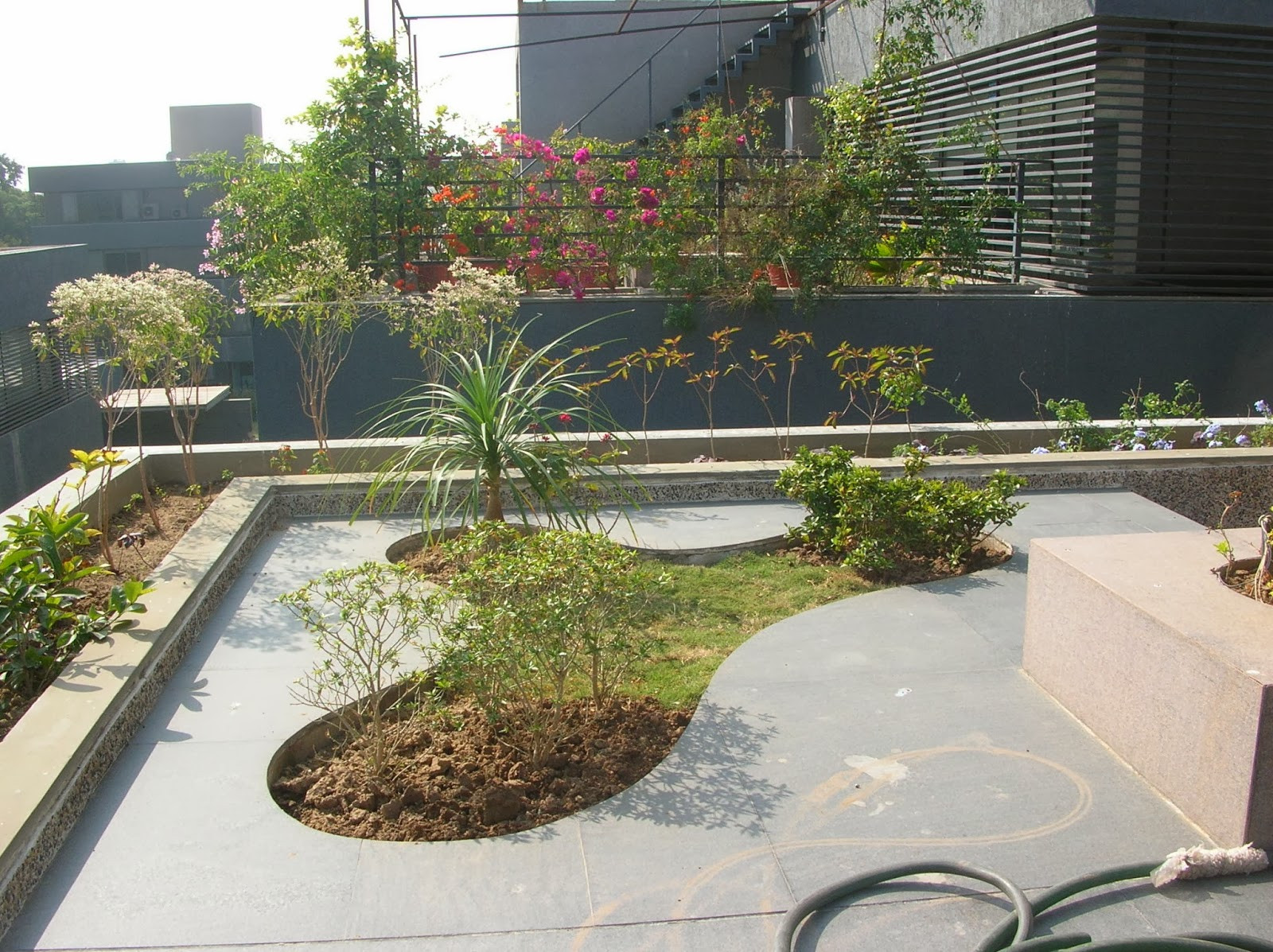 Terrace Landscape Plants  Bonsai Trees and Plants in Ahmedabad for Sale garden