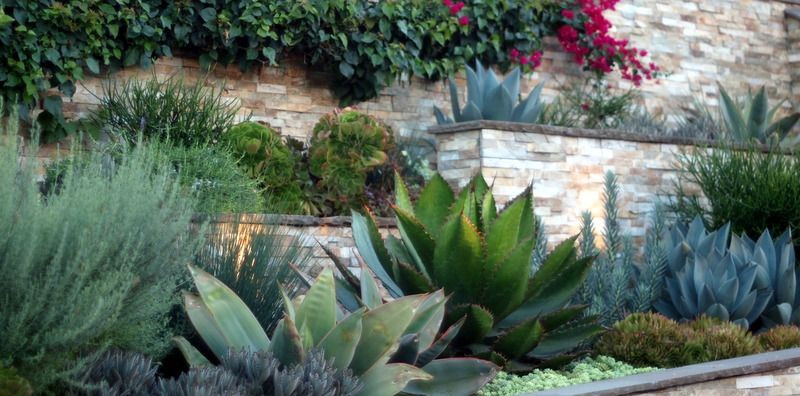 Terrace Landscape Plants  terraced gardens and the Cow Horn agave With images