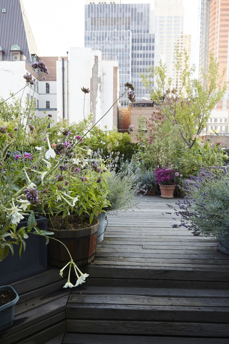 Terrace Landscape Plants  21 Beautiful Terrace Garden You should Look for