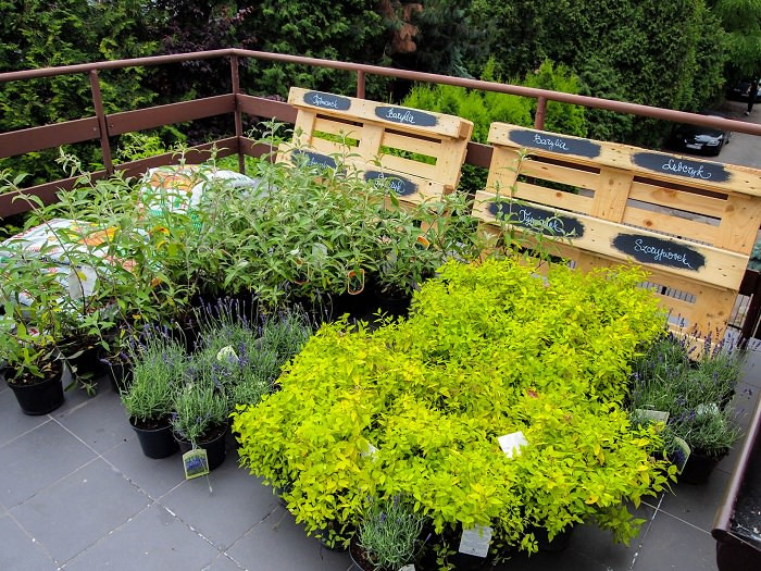 Terrace Landscape Plants  Best Terrace Roof Garden Plants You should Grow