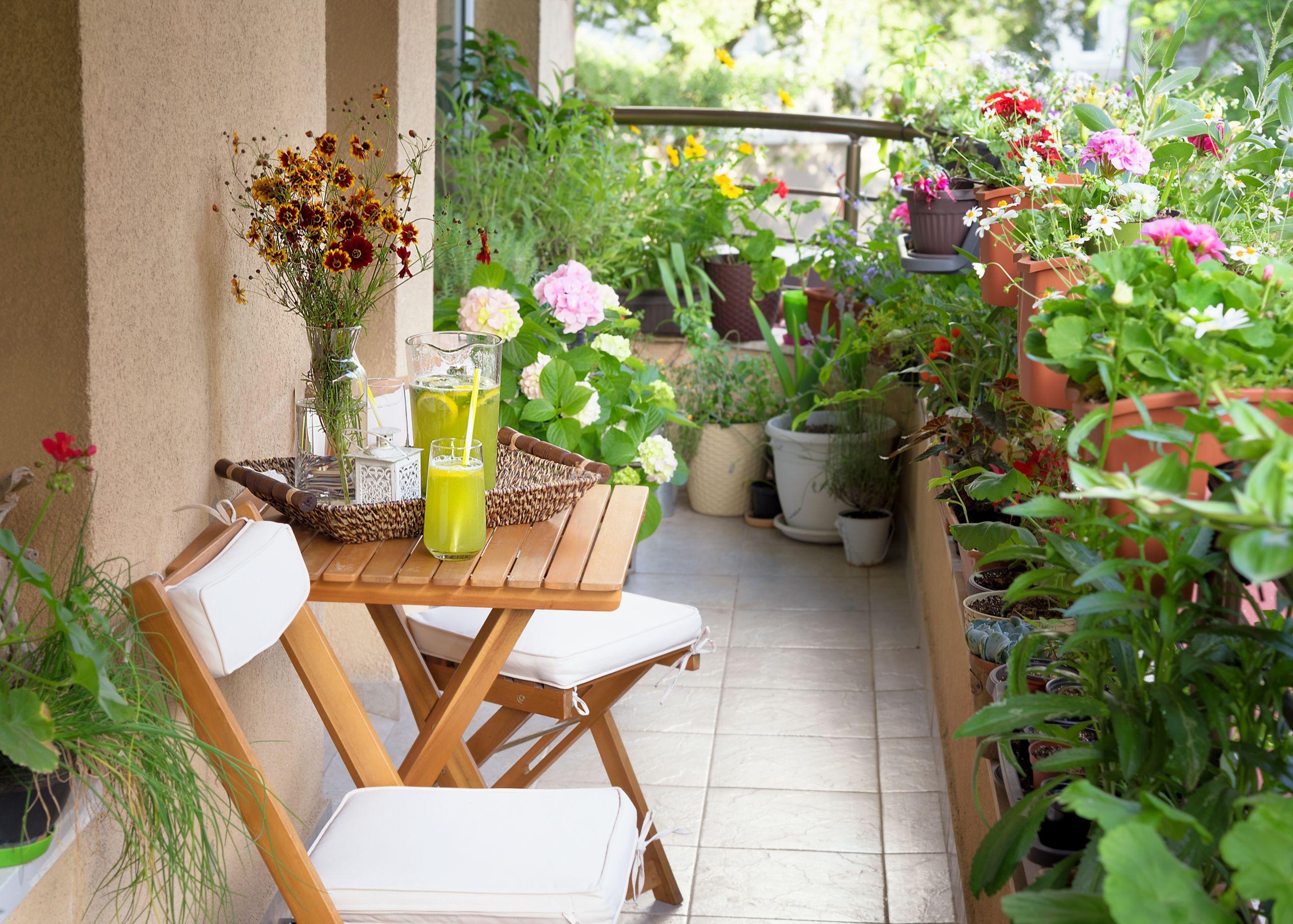 Terrace Landscape Plants  Starting a Terrace Garden or Balcony Garden]