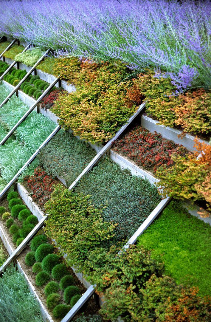 Terrace Landscape Plants  104 best images about Slope Plantings on Pinterest