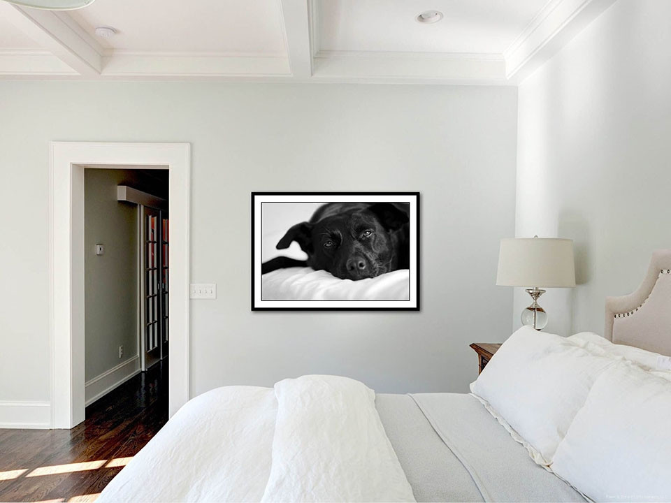 Wall Prints For Bedroom  custom wall art – Paws & Prints Pet graphy – Modern