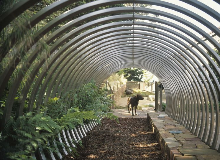 Word Whizzle Backyard  Dog Idea Exploration Tunnel