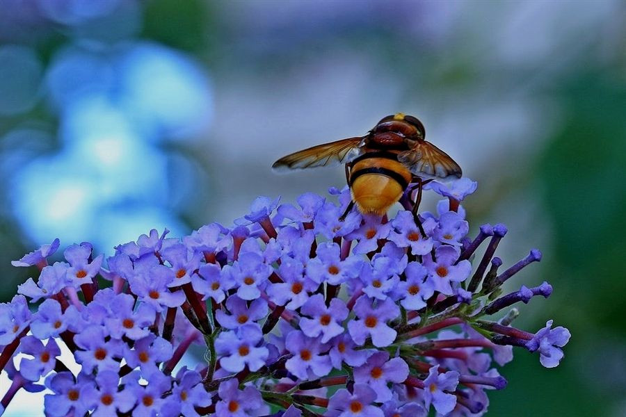 Word Whizzle Backyard  Amazing Advice For A Thriving Organic Garden With images