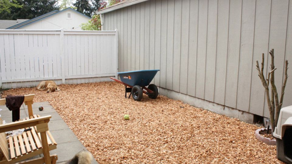 Word Whizzle Backyard  Better Than a Dog Run — Yard Ideas for Your Four Legged